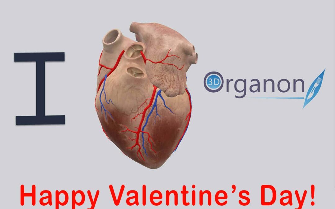 How the human heart did become associated with love?